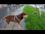 Прогулка по набережной канала Грибоедова