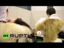 Japan_ Kemono lovers flaunt their inner furry BEAST