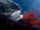 Реклама Ariston Aqualtis - Подводный мир (Underwater World TV Commercial)