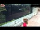 Видео 1086 Веселый Мир Животных Прикольные Животные Приколы Про Животных