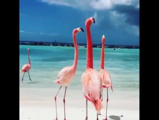 Love These Beautiful Birds!