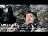 Боевой пес — лучший друг солдата | Трейлер