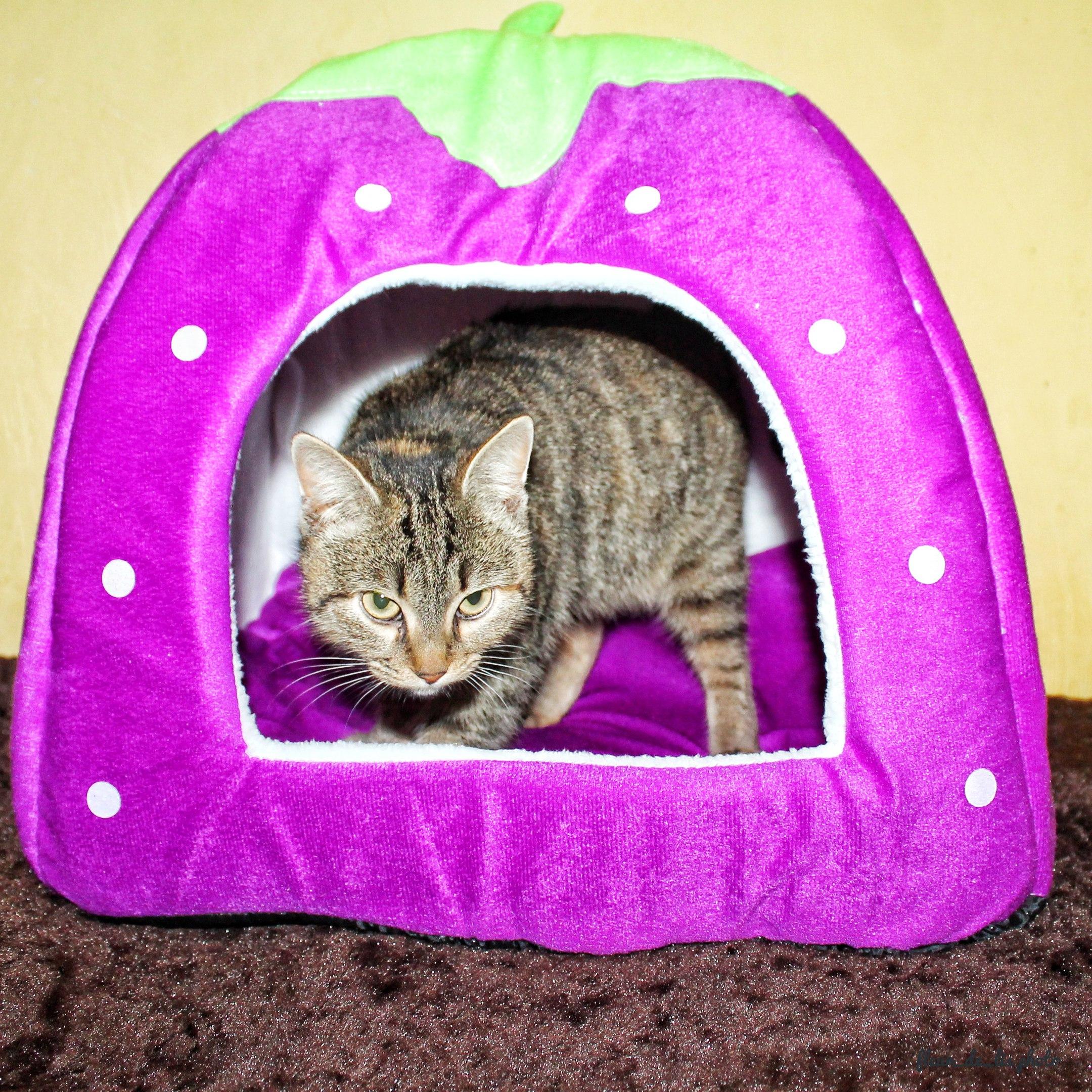 Программа доступное жилье интересует Заходите в пост расскажу как приобрести квартиру-студию Ну да для кошек ну или небо