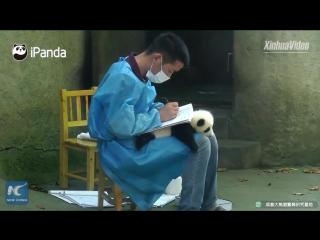 Панда как планшетная доска?