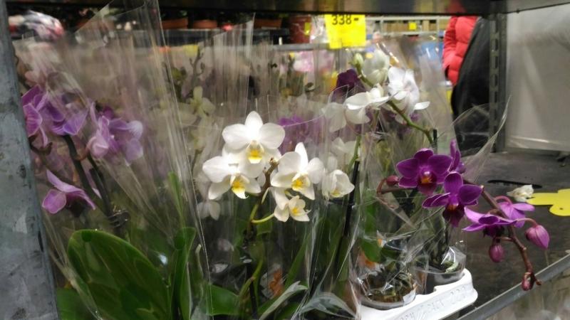 Стрим из Касторамы, цветы 8 марта
