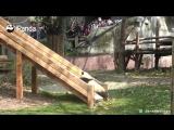 Мило и смешно: забавные панды как дети катаются с горки.