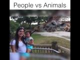 Что происходит, когда животные перестают быть вежливыми )))