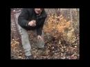 Крыжовник посадка, размножение и уход