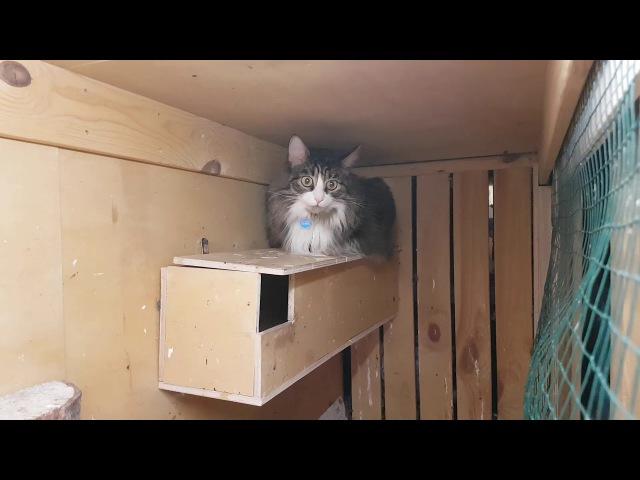 Котик Мурлок пришёл в гости в сычевальню к домовым гнусям