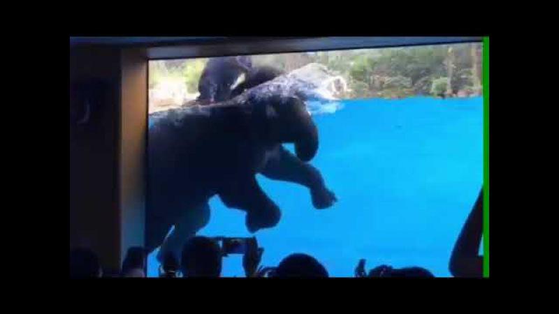Тайланд ныряющий слоник