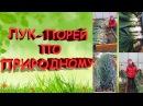 Лук порей по природному 100% результат От посева до сбора урожая