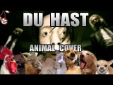Rammstein - Du Hast (Animal Cover)