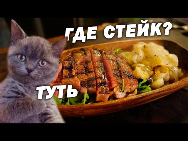 ГОРЕЛЫЙ ЛУК и СОЕВЫЙ СТЕЙК...Кот ВЫЖИЛ!