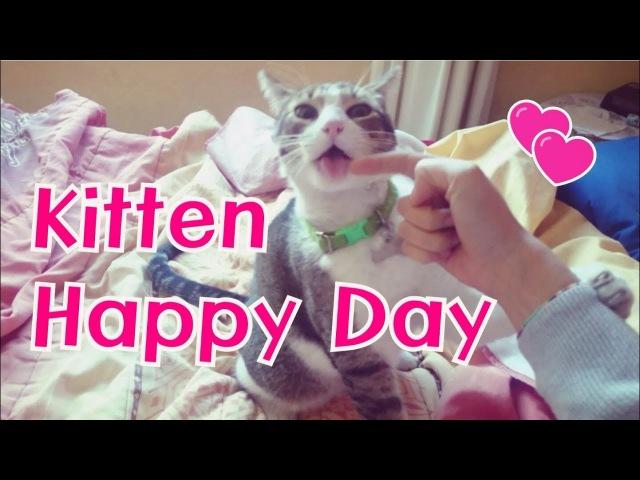 Cat Cafe I Happy day I Kitten I 고양이 I Pet I Healing I Animal Therapy
