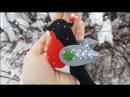 Felt Bullfinch DIY Снегирь из фетра мастер класс