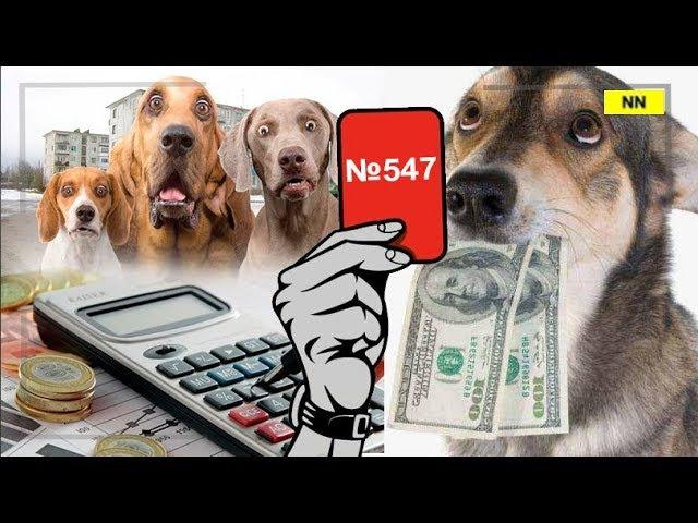 На подходе – штрафы и облавы на домашних животных. Какие - расскажет Красная карточка №547