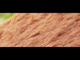 Hair Rendering in Redshift for Cinema 4D