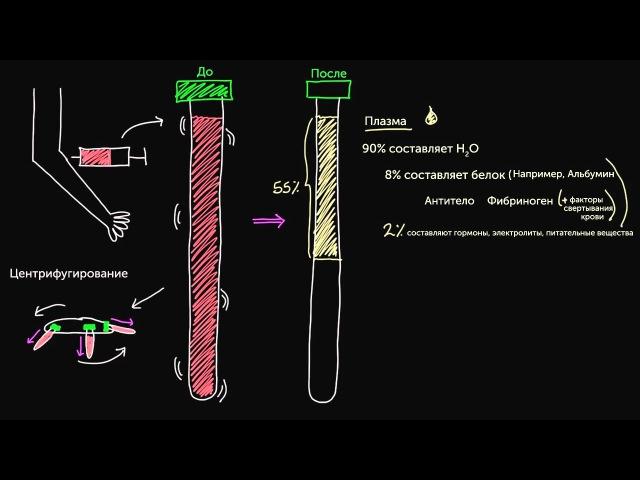 1 Гематология Основные компоненты крови Медицина