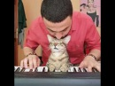 There are two means of refuge from the miseries of life: Music and cats..