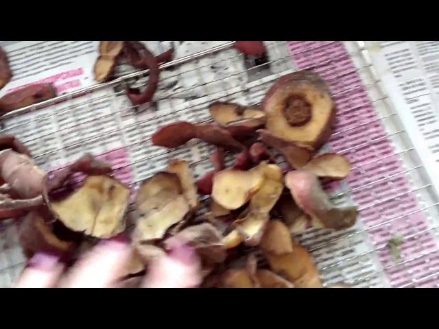 о картофельных очистках для смородины