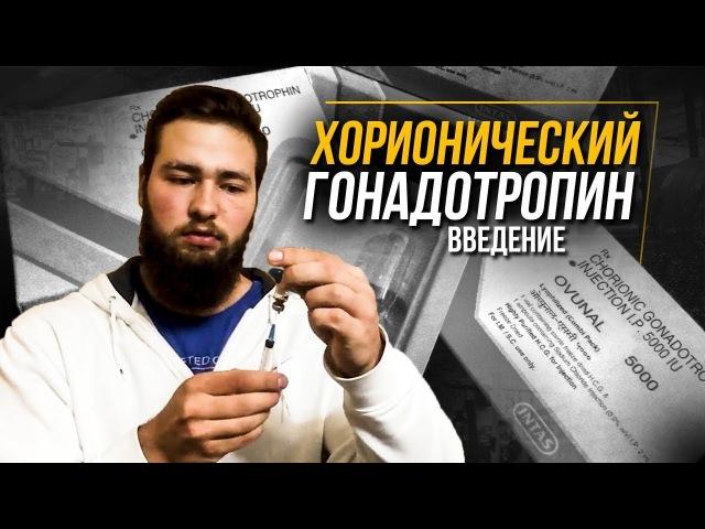 Хорионический гонадотропин человека на курсе - вводное (ХГЧ в Бодибилдинге, Протоколы)