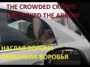 THE CROWDED CROWD DESTROYED THE ARROW ANIMAL PLANETA НАГЛАЯ ВОРОНА ОБМАНУЛА ВОРОБЬЯ