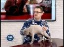 Советы ветеринара: профилактическая стрижка кошек