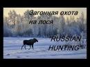 Загонная охота на лося - RUSSIAN HUNTING охота без цензуры