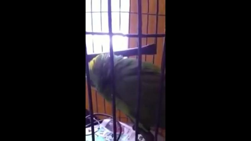 Младенческий плач хитрого попугая. (ЖурналСпорт и Здоровый Образ Жизни) vk.com/club126967384