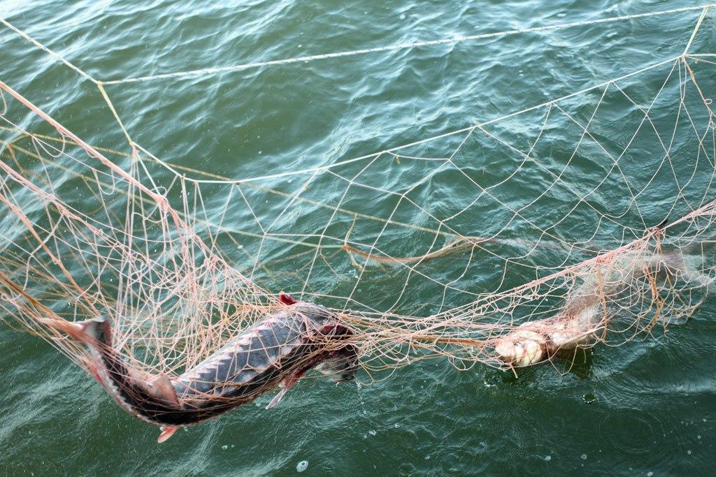 В Крыму развелись браконьеры