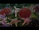 BBC Жизнь Фильм 8 Творения глубин