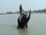 Читван. Слоны