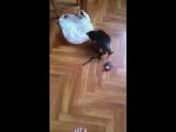Мышь и Фрида