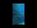 Океанариум в Южной Корее, остров Ченджудо, strip-job