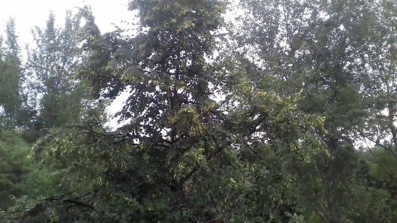 02.07.2017 Вид из окна. Там, где я живу. Перед дождём (из кухни)