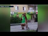 Танцующего медведя в кроссовках сняли на видео в Челябинске