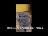Кот говорит-Голова моя болит