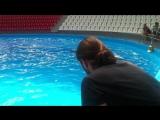 моя русалка в дельфинарии.