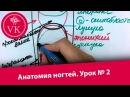 Viktoriia Klopotova Урок №2 Анатомия ногтей видео учебник