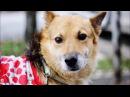 Собака Грей удивительные истории спасения бездомных животных