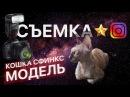Канадский сфинкс. Фотосессиия в музее космонавтики Лысый кот. Смешные коты. Кошка видео ASIA SPHYNX