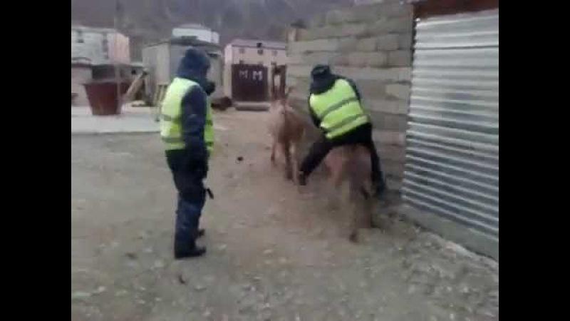 ХИТ ИНТЕРНЕТА ДПС на ОСЛЕ Осел решил покатать инспектора РЖАКА 100%
