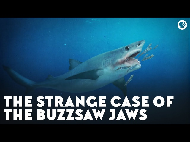 The Strange Case of the Buzzsaw Jaws