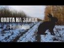 Охота на зайца беляка с русской гончей.