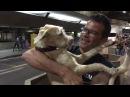 Собака безумно счастлива видеть хозяина || ViralHog