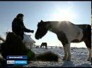 В Данилове две девушки содержат приют для списанных со службы лошадей