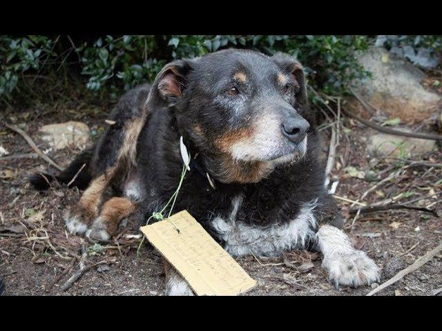 В семье думали, что их пёс исчез навсегда, но он вернулся с неожиданной запиской ...