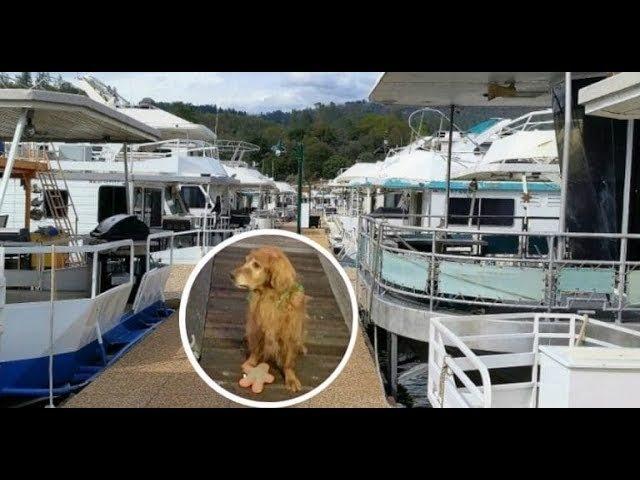 Утро, 6:00, на пристани для яхт – никого… Кроме утопающего в воде старика и… золотистого пса!