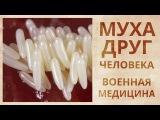 Удаление некротических тканей личинками мух