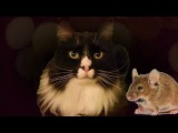 Sonar Radar Ears - Talking Cat Poodle Paw